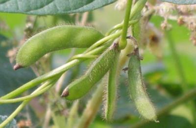 OGM 2.0